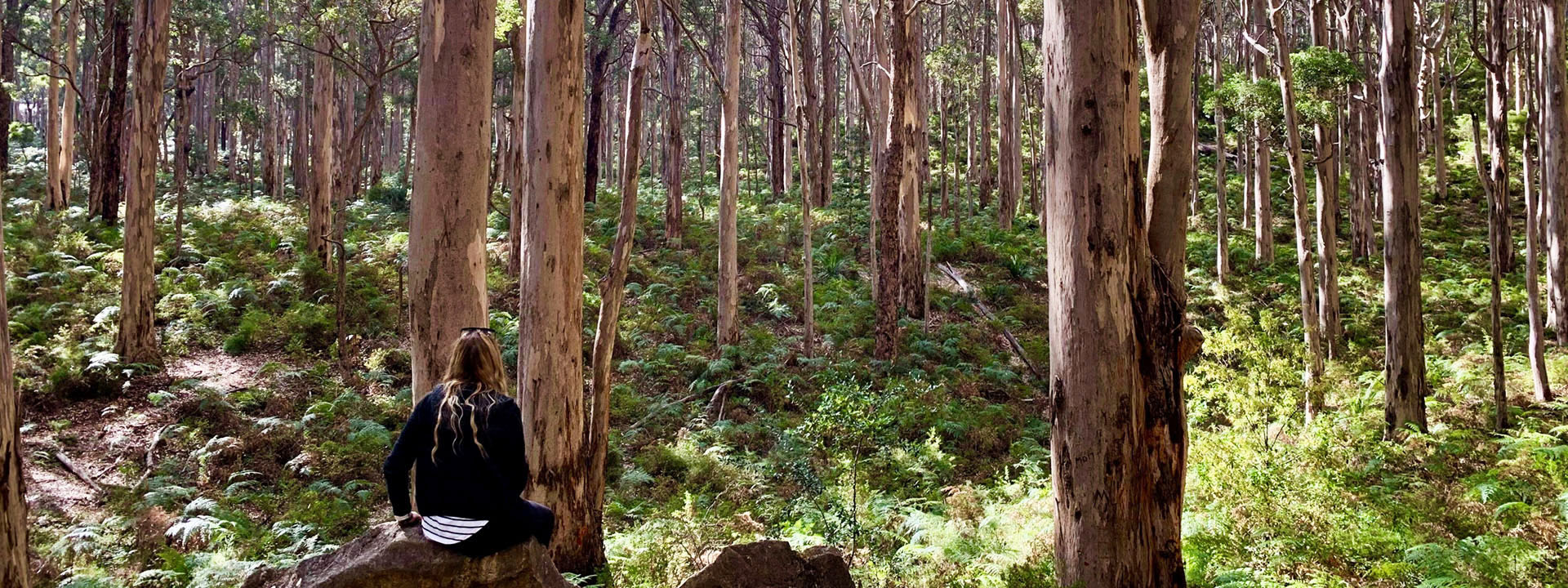 Boranup Karri Forest. Photo by Kelly Scherbarth/DBCA