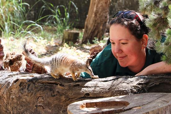 Numbat keeper at Perth Zoo