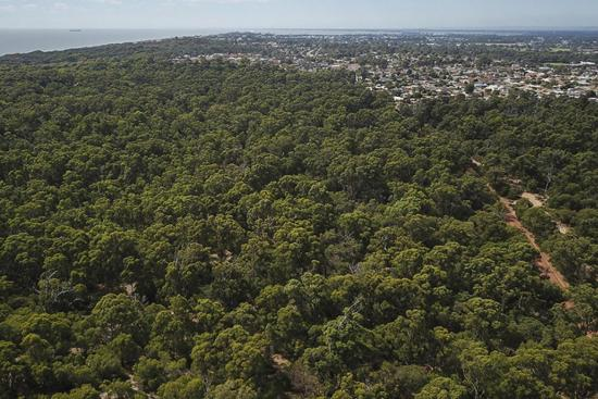 View towards Bunbury over the tuart forest. Photo by Shem Bisluk/DBCA